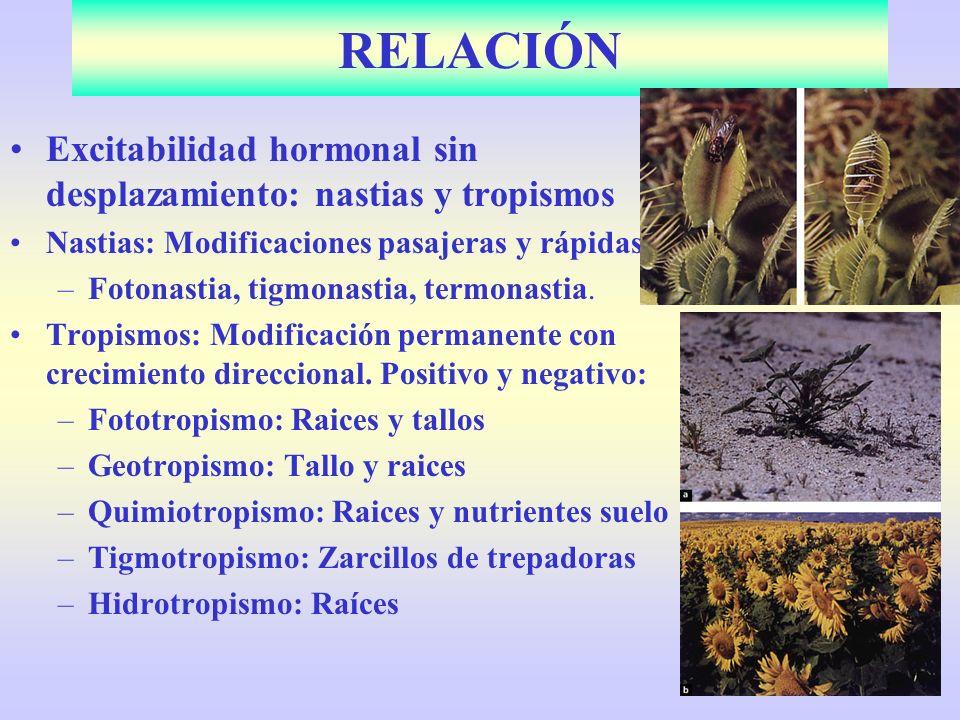 Excitabilidad hormonal sin desplazamiento: nastias y tropismos Nastias: Modificaciones pasajeras y rápidas: –Fotonastia, tigmonastia, termonastia. Tro