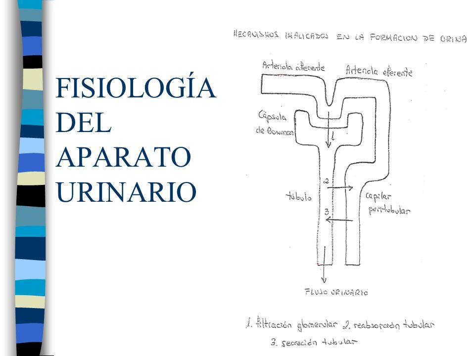 FISIOLOGÍA DEL APARATO URINARIO