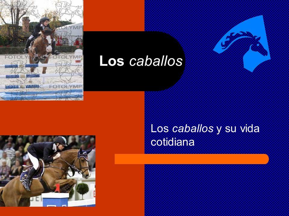 Los caballos Los caballos y su vida cotidiana