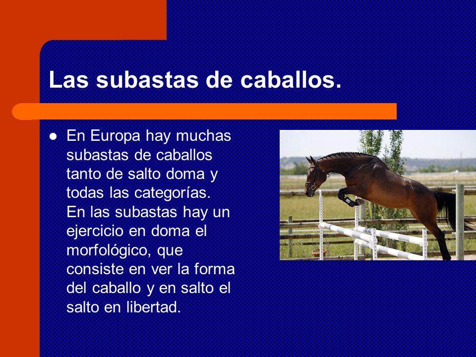 Las subastas de caballos. En Europa hay muchas subastas de caballos tanto de salto doma y todas las categorías. En las subastas hay un ejercicio en do