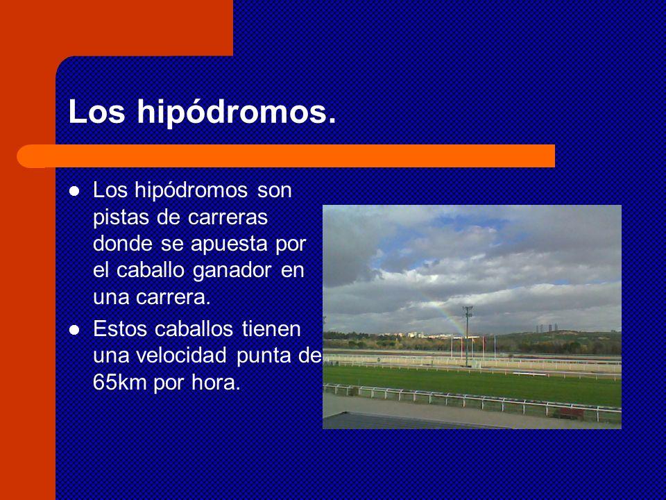 Los hipódromos. Los hipódromos son pistas de carreras donde se apuesta por el caballo ganador en una carrera. Estos caballos tienen una velocidad punt