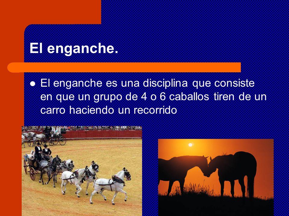 El enganche. El enganche es una disciplina que consiste en que un grupo de 4 o 6 caballos tiren de un carro haciendo un recorrido