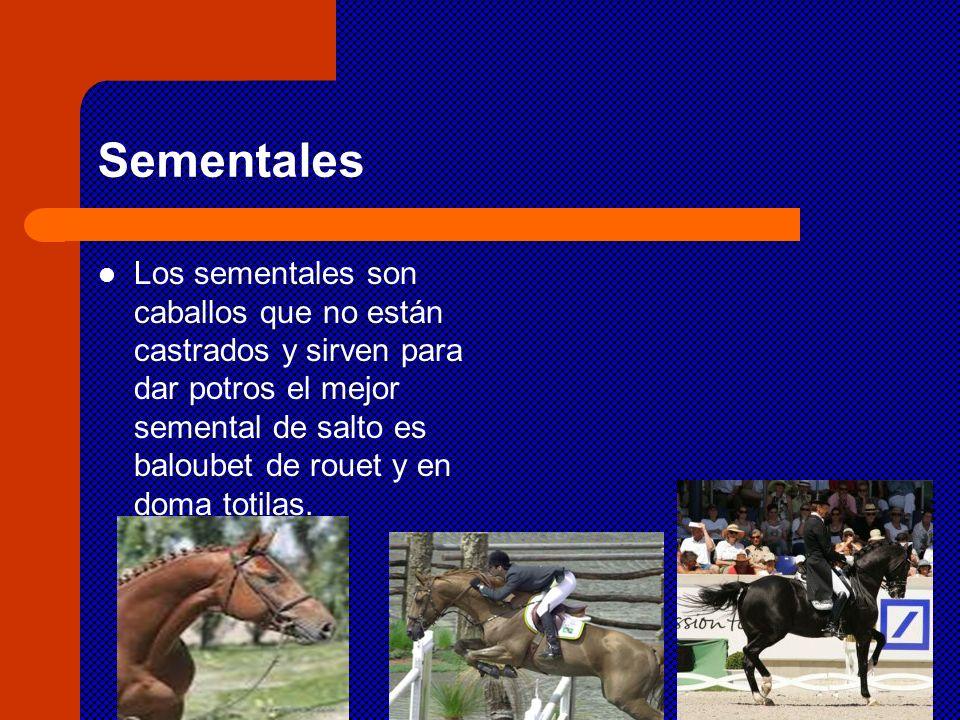 Sementales Los sementales son caballos que no están castrados y sirven para dar potros el mejor semental de salto es baloubet de rouet y en doma totil