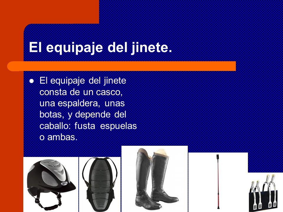 El equipaje del jinete. El equipaje del jinete consta de un casco, una espaldera, unas botas, y depende del caballo: fusta espuelas o ambas.