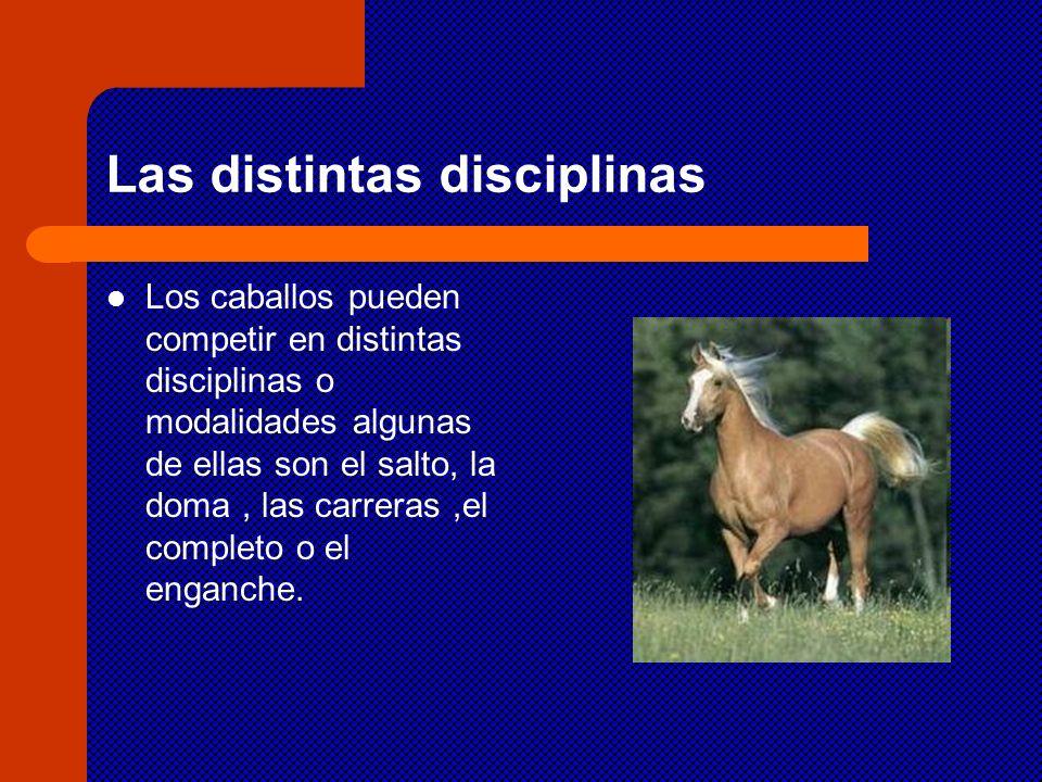 Las distintas disciplinas Los caballos pueden competir en distintas disciplinas o modalidades algunas de ellas son el salto, la doma, las carreras,el
