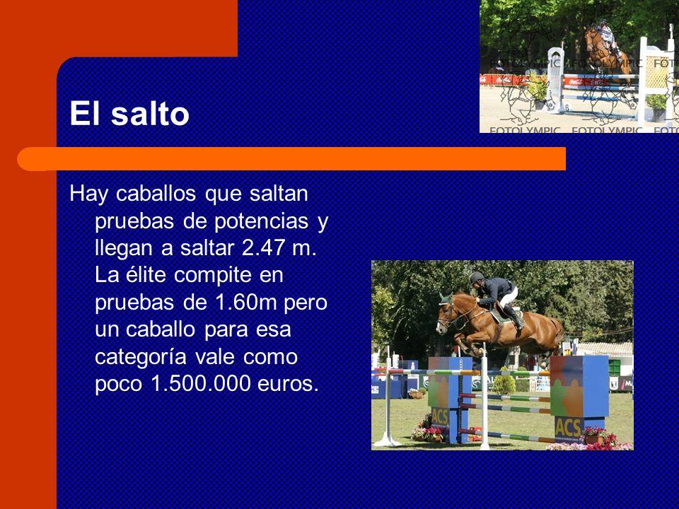 El salto Hay caballos que saltan pruebas de potencias y llegan a saltar 2.47 m. La élite compite en pruebas de 1.60m pero un caballo para esa categorí