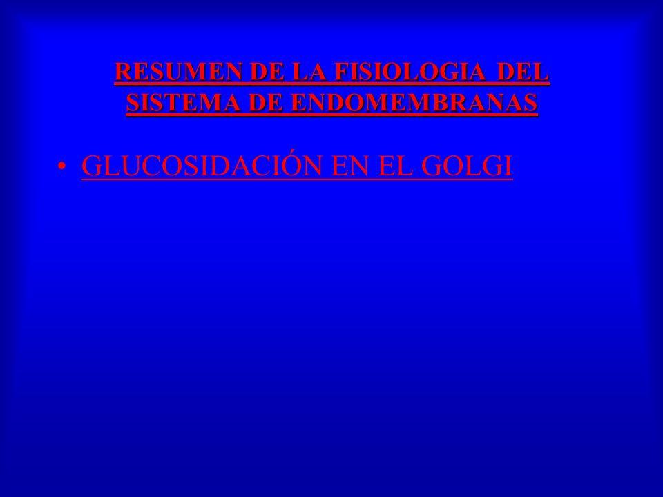 GLUCOSIDACIÓN EN EL GOLGI RESUMEN DE LA FISIOLOGIA DEL SISTEMA DE ENDOMEMBRANAS RESUMEN DE LA FISIOLOGIA DEL SISTEMA DE ENDOMEMBRANAS