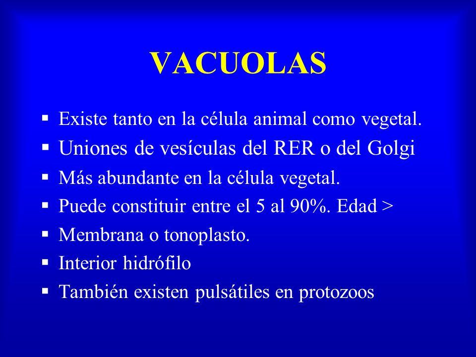 Existe tanto en la célula animal como vegetal. Uniones de vesículas del RER o del Golgi Más abundante en la célula vegetal. Puede constituir entre el