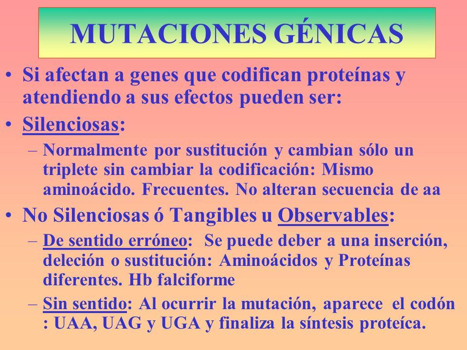 MUTACIONES GÉNICAS Si afectan a genes que codifican proteínas y atendiendo a sus efectos pueden ser: Silenciosas: –Normalmente por sustitución y cambi