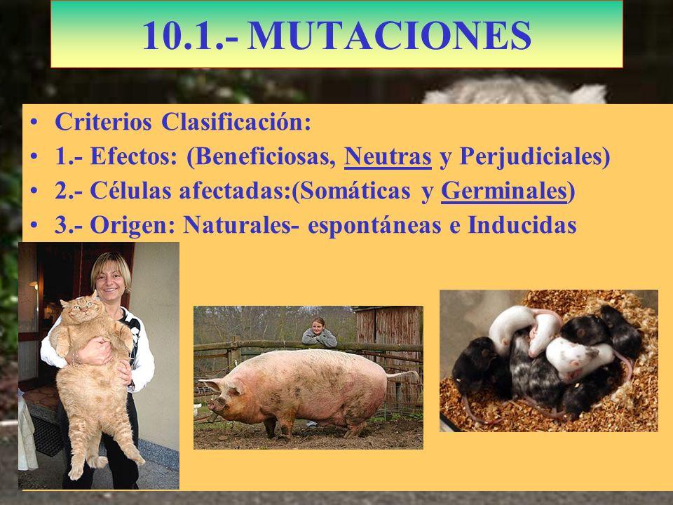 Lemurcat: Cruce Lemur con gato en China¿? 10.1.- MUTACIONES Criterios Clasificación: 1.- Efectos: (Beneficiosas, Neutras y Perjudiciales) 2.- Células