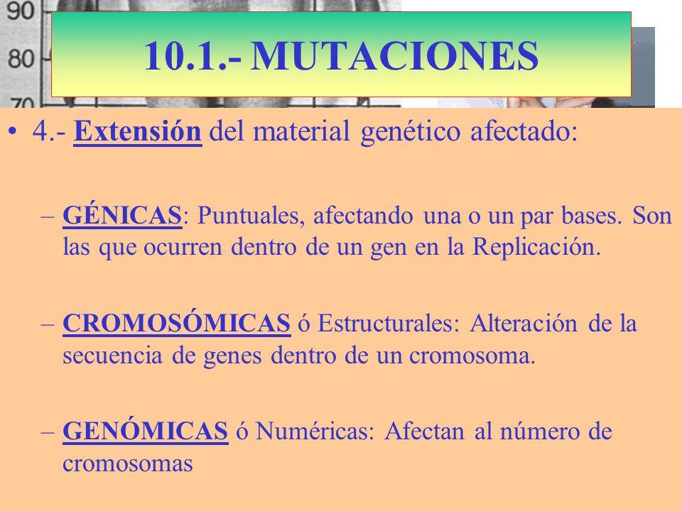 S. Marfán: Cromosoma 15 Dominante Fibrilina 10.1.- MUTACIONES 4.- Extensión del material genético afectado: –GÉNICAS: Puntuales, afectando una o un pa