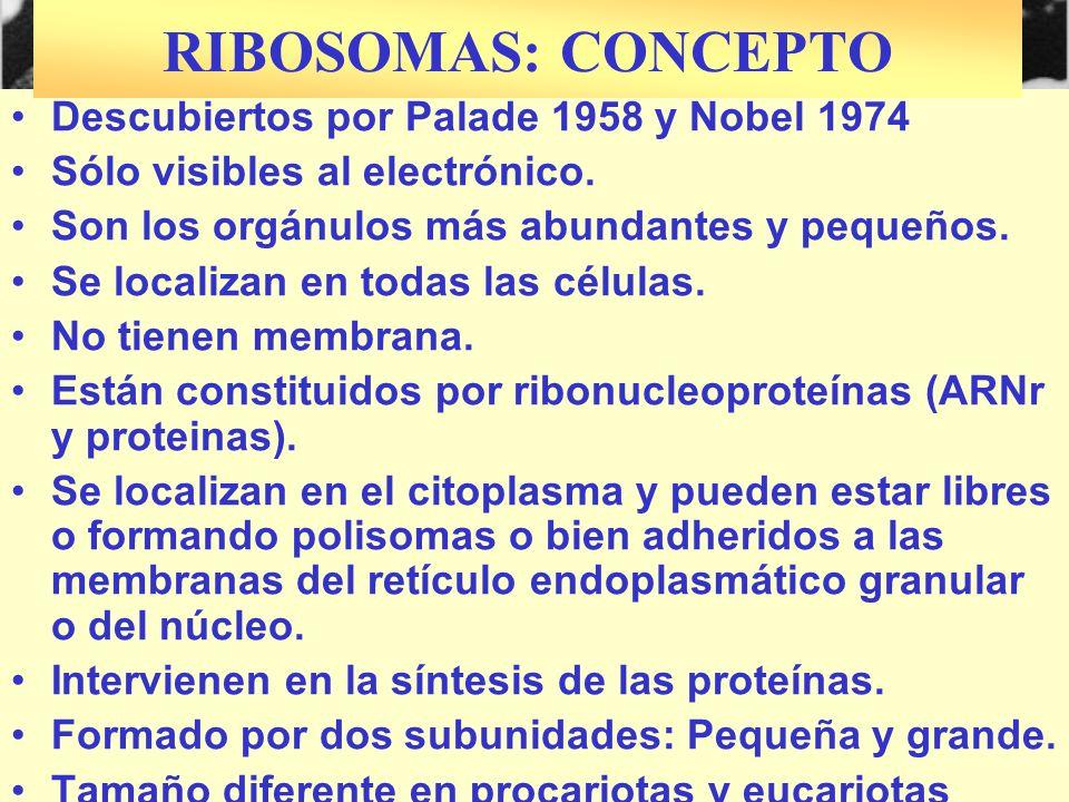Descubiertos por Palade 1958 y Nobel 1974 Sólo visibles al electrónico. Son los orgánulos más abundantes y pequeños. Se localizan en todas las células