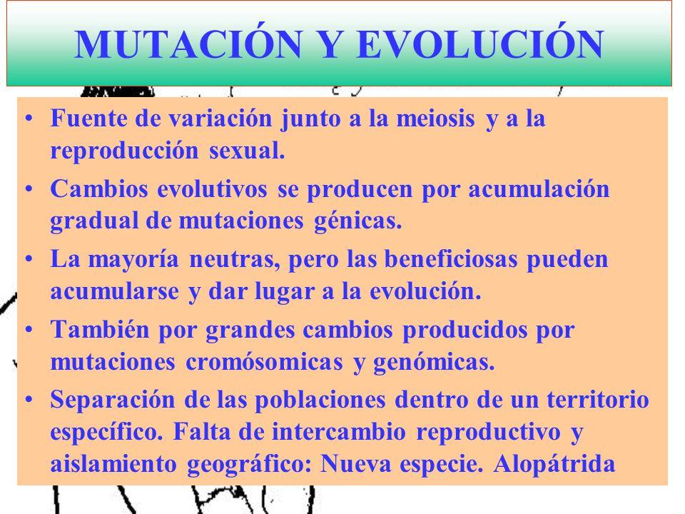 MUTACIÓN Y EVOLUCIÓN Fuente de variación junto a la meiosis y a la reproducción sexual. Cambios evolutivos se producen por acumulación gradual de muta