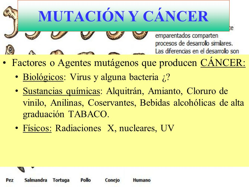 MUTACIÓN Y CÁNCER Factores o Agentes mutágenos que producen CÁNCER: Biológicos: Virus y alguna bacteria ¿? Sustancias químicas: Alquitrán, Amianto, Cl