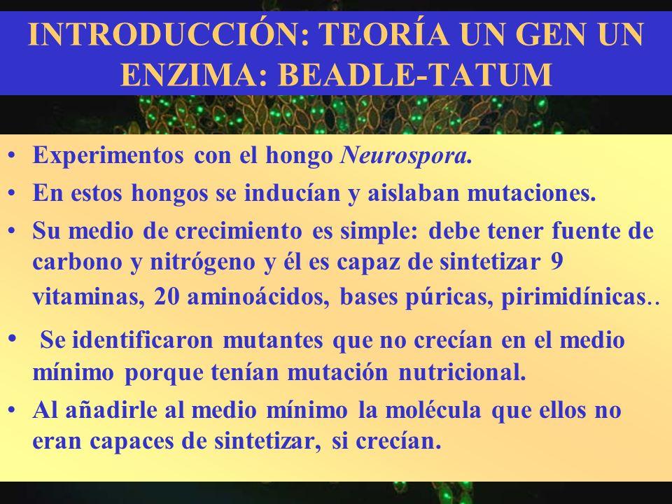 INTRODUCCIÓN: TEORÍA UN GEN UN ENZIMA: BEADLE-TATUM Experimentos con el hongo Neurospora. En estos hongos se inducían y aislaban mutaciones. Su medio