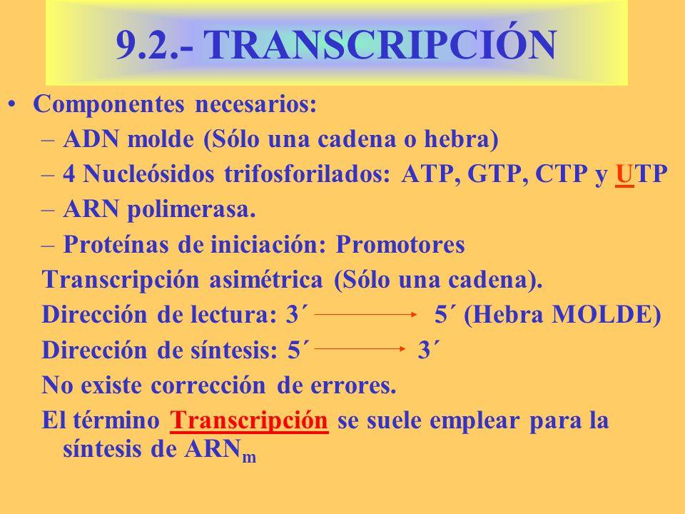 9.2.- TRANSCRIPCIÓN Componentes necesarios: –ADN molde (Sólo una cadena o hebra) –4 Nucleósidos trifosforilados: ATP, GTP, CTP y UTP –ARN polimerasa.
