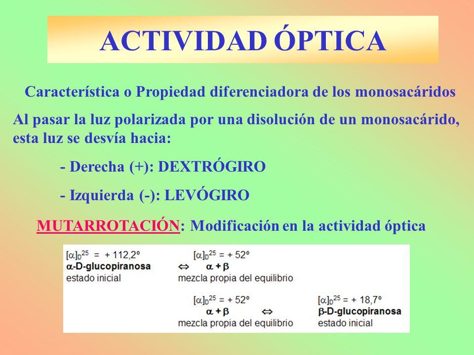 ACTIVIDAD ÓPTICA Característica o Propiedad diferenciadora de los monosacáridos Al pasar la luz polarizada por una disolución de un monosacárido, esta