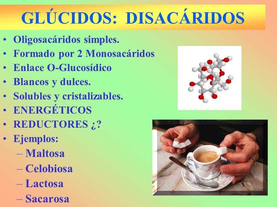 GLÚCIDOS: DISACÁRIDOS Oligosacáridos simples. Formado por 2 Monosacáridos Enlace O-Glucosídico Blancos y dulces. Solubles y cristalizables. ENERGÉTICO