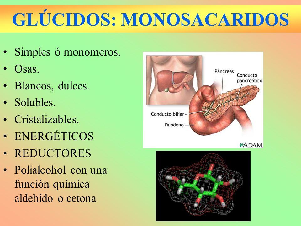 GLÚCIDOS: NÚMERO DE CARBONOS ALDEHIDOS (ALDOSAS) CETONAS (CETOSAS) 3 C (TRIOSAS) GLICERALDEHIDODIHIDROXICE TONA 5C (PENTOSAS) RIBOSA DESOXIRRIBOSA RIBULOSA 6C (HEXOSAS) GLUCOSA GALACTOSAFRUCTOSA