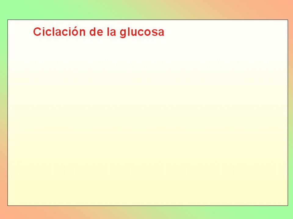 FIBRAS CELULOSA