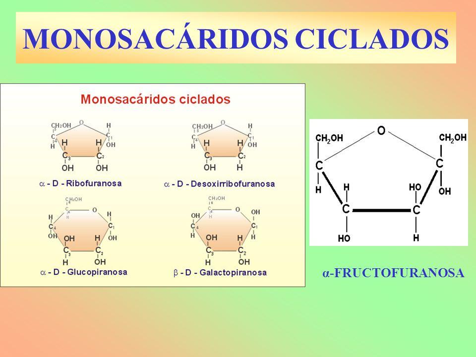 GLÚCIDOS: ANOMERÍAS Es un tipo de isomería que aparece al ciclarse los monosacáridos.