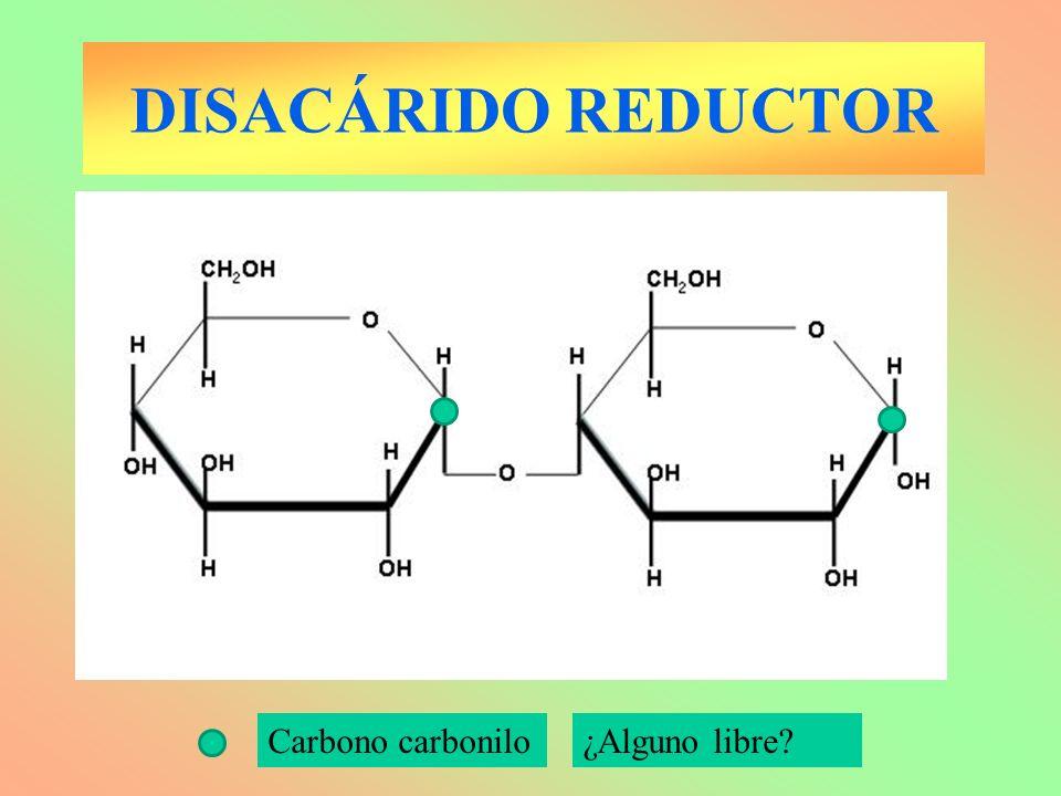 DISACÁRIDO REDUCTOR Carbono carbonilo¿Alguno libre?