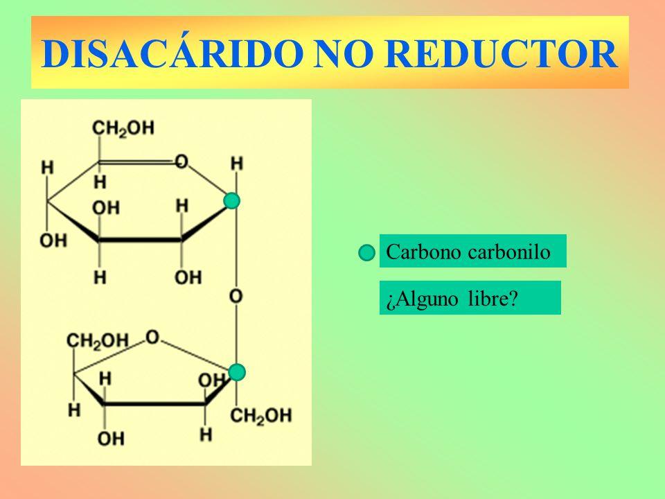 DISACÁRIDO NO REDUCTOR Carbono carbonilo ¿Alguno libre?