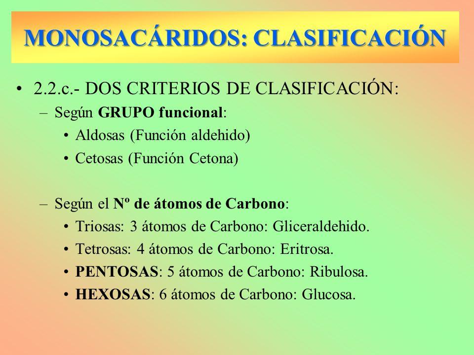 MONOSACÁRIDOS: CLASIFICACIÓN 2.2.c.- DOS CRITERIOS DE CLASIFICACIÓN: –Según GRUPO funcional: Aldosas (Función aldehido) Cetosas (Función Cetona) –Segú