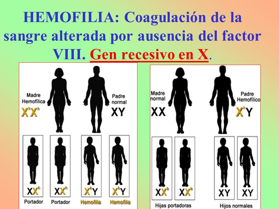 HEMOFILIA: Coagulación de la sangre alterada por ausencia del factor VIII. Gen recesivo en X.