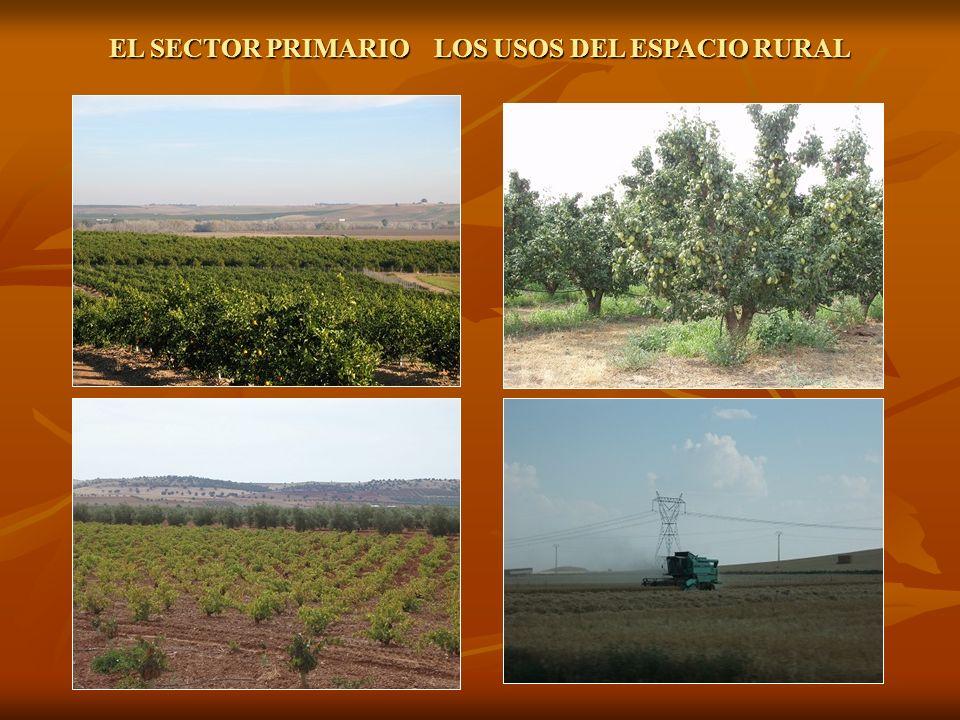 LA AGRICULTURA.Producción: Cereales: secanos del interior a barbecho y alternando con leguminosas.