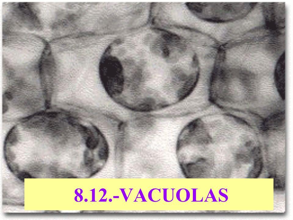 8.12.-VACUOLAS