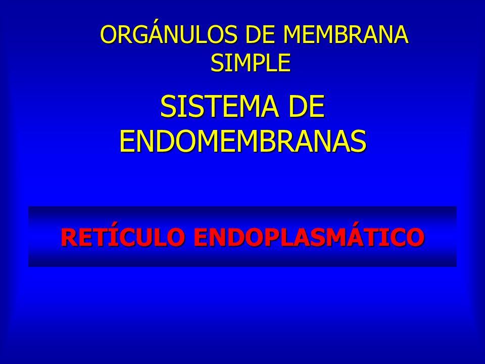 RETÍCULO ENDOPLASMÁTICO SISTEMA DE ENDOMEMBRANAS ORGÁNULOS DE MEMBRANA SIMPLE ORGÁNULOS DE MEMBRANA SIMPLE