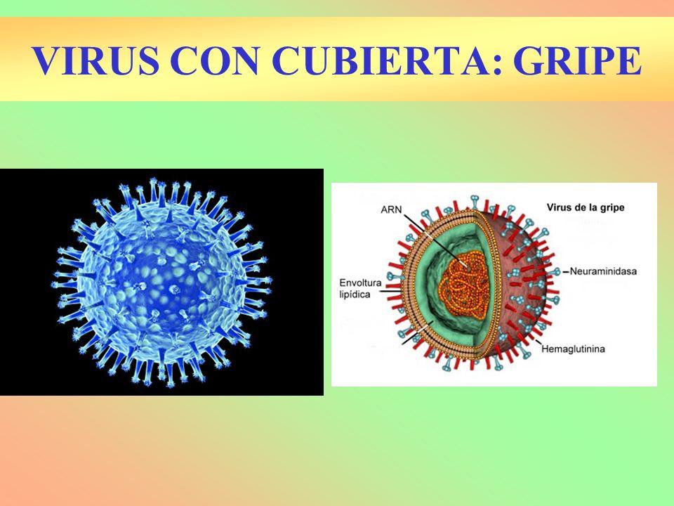 VIRUS CON CUBIERTA: GRIPE