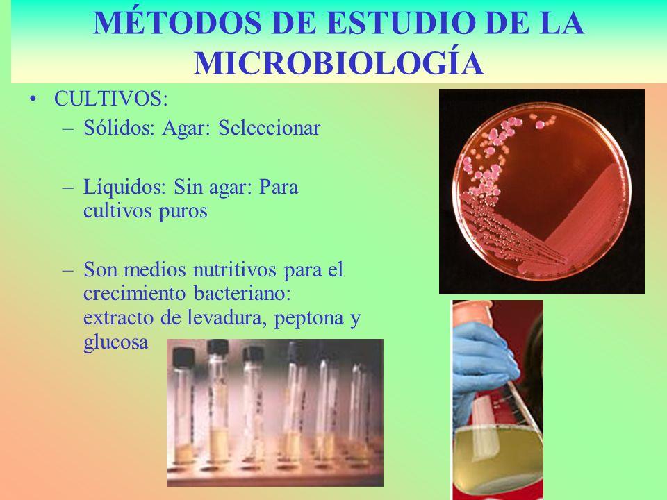 TINCIÓN: Gram –Violeta genciana 2 minutos –Lavar y añadir Lugol 1 m.