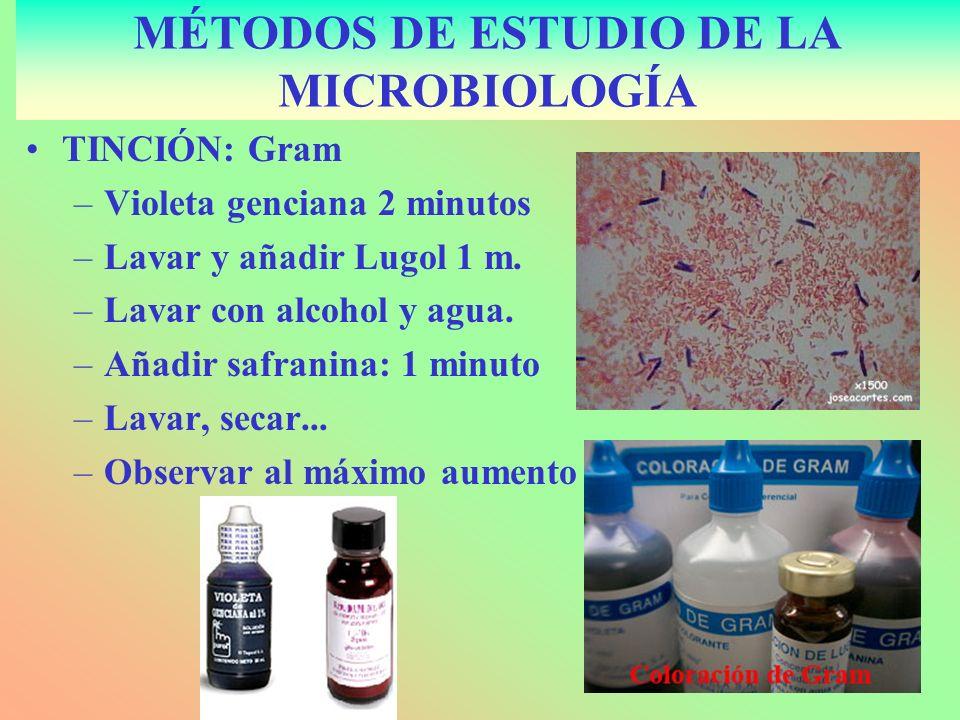 TINCIÓN: Gram –Violeta genciana 2 minutos –Lavar y añadir Lugol 1 m. –Lavar con alcohol y agua. –Añadir safranina: 1 minuto –Lavar, secar... –Observar