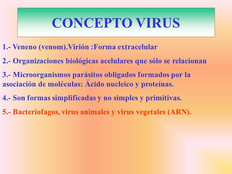 CONCEPTO VIRUS 1.- Veneno (venom).Virión :Forma extracelular 2.- Organizaciones biológicas acelulares que sólo se relacionan 3.- Microorganismos parás