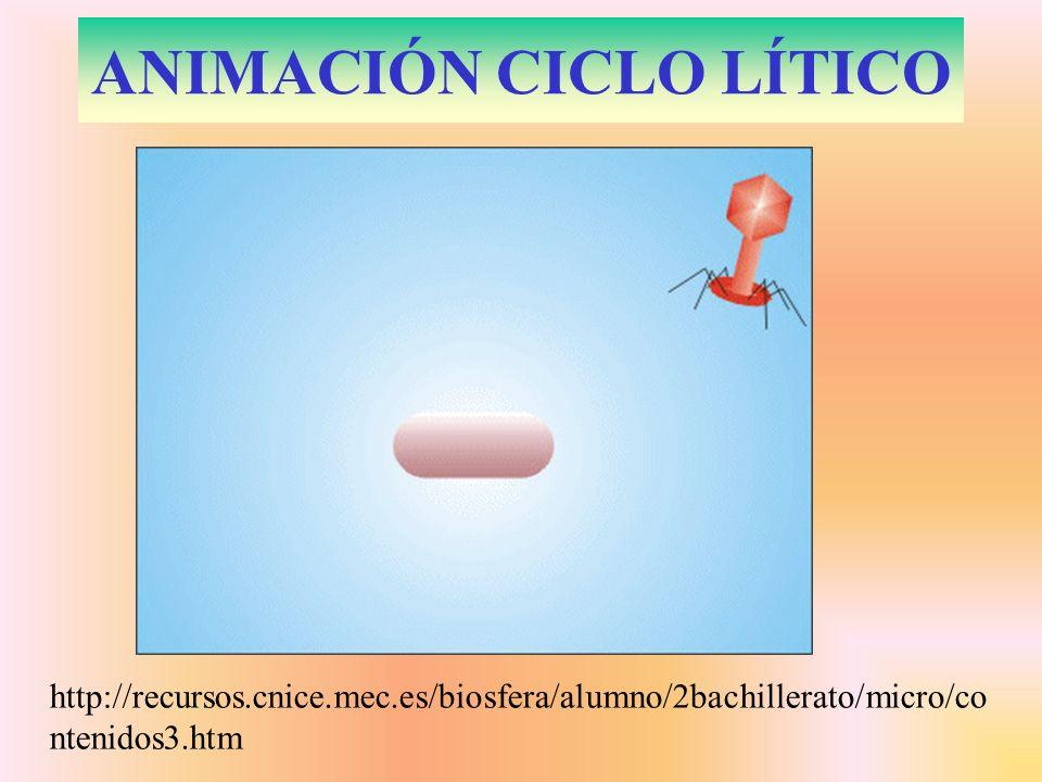 ANIMACIÓN CICLO LÍTICO http://recursos.cnice.mec.es/biosfera/alumno/2bachillerato/micro/co ntenidos3.htm