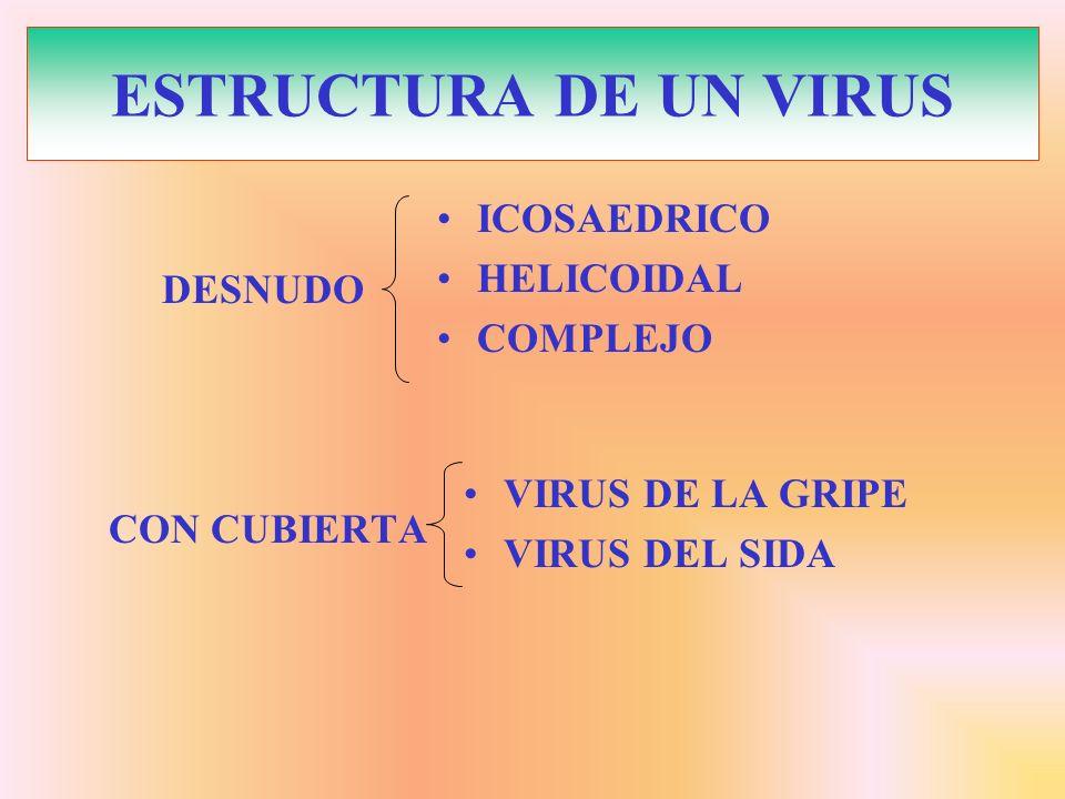 ESTRUCTURA DE UN VIRUS ICOSAEDRICO HELICOIDAL COMPLEJO CON CUBIERTA VIRUS DE LA GRIPE VIRUS DEL SIDA DESNUDO