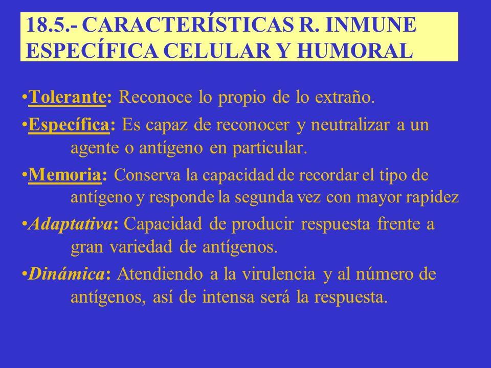 18.5.- CARACTERÍSTICAS R.