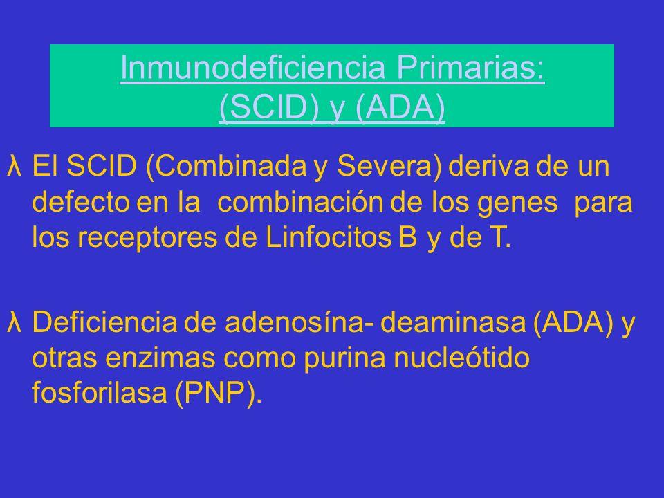 Inmunodeficiencia Primarias: (SCID) y (ADA) λEl SCID (Combinada y Severa) deriva de un defecto en la combinación de los genes para los receptores de Linfocitos B y de T.