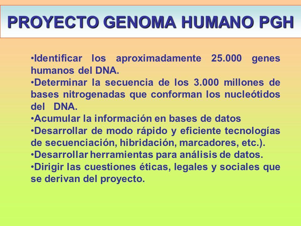 Identificar los aproximadamente 25.000 genes humanos del DNA. Determinar la secuencia de los 3.000 millones de bases nitrogenadas que conforman los nu