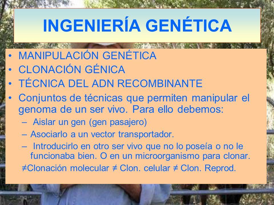 INGENIERÍA GENÉTICA MANIPULACIÓN GENÉTICA CLONACIÓN GÉNICA TÉCNICA DEL ADN RECOMBINANTE Conjuntos de técnicas que permiten manipular el genoma de un s