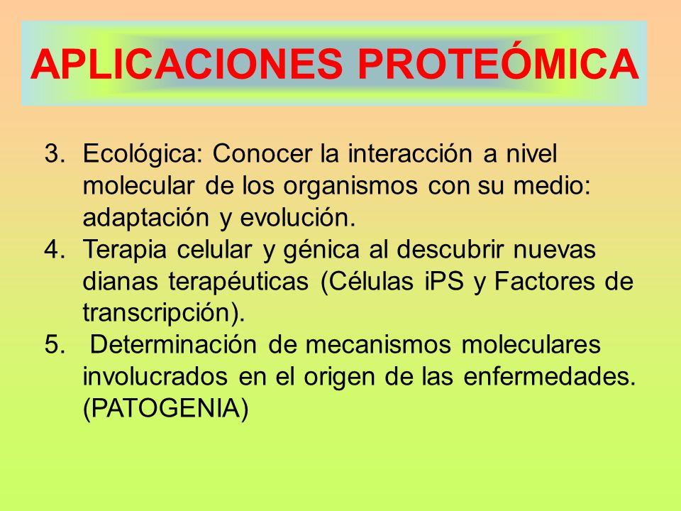 APLICACIONES PROTEÓMICA 3.Ecológica: Conocer la interacción a nivel molecular de los organismos con su medio: adaptación y evolución. 4.Terapia celula