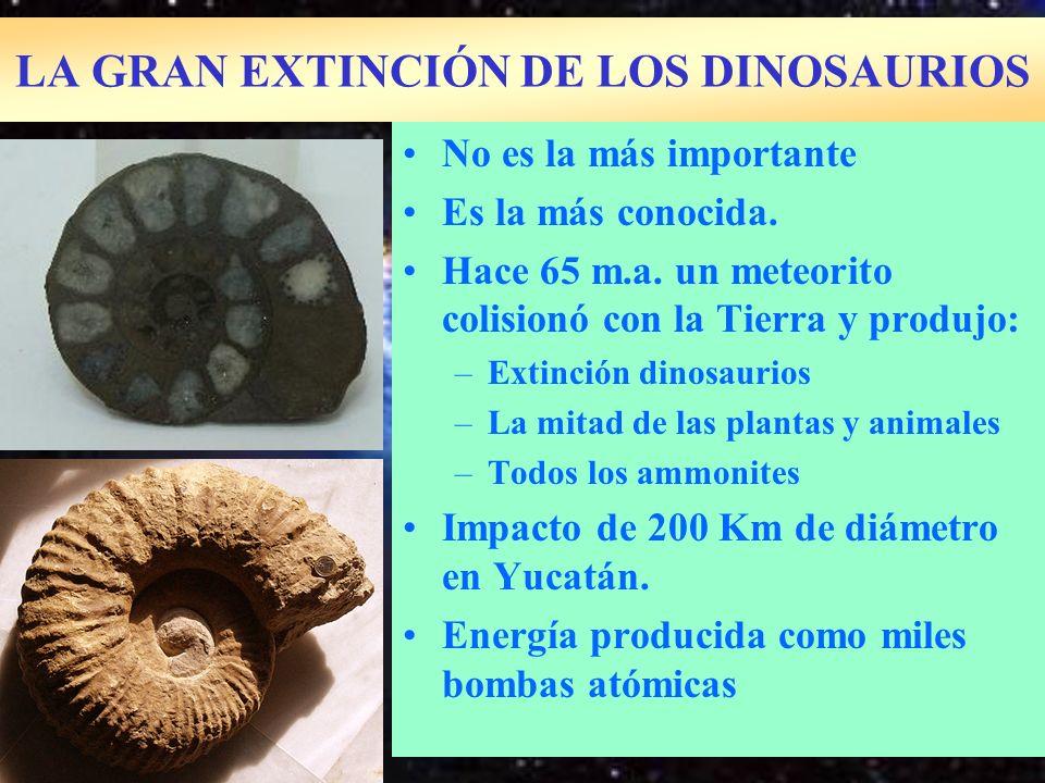 LA GRAN EXTINCIÓN DE LOS DINOSAURIOS No es la más importante Es la más conocida. Hace 65 m.a. un meteorito colisionó con la Tierra y produjo: –Extinci