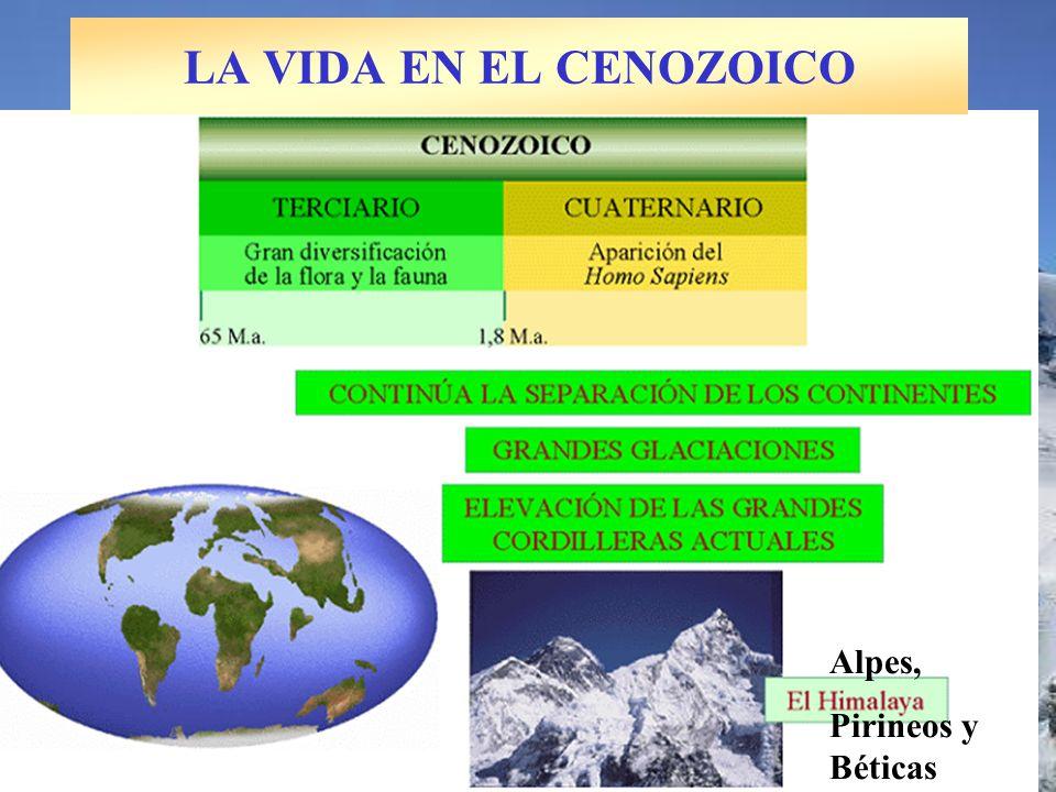 Alpes, Pirineos y Béticas LA VIDA EN EL CENOZOICO