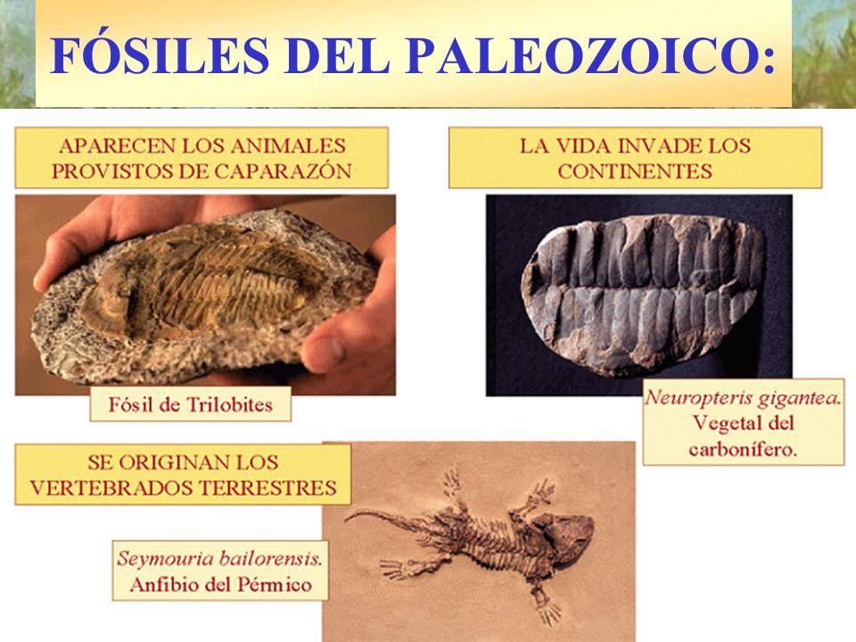 FÓSILES DEL PALEOZOICO: