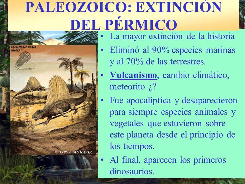 LOS DINOSAURIOS DOMINAN LA TIERRA Reptiles experimentan gran diversificación durante Mesozoico Colonizaron diversos habitats: –Aire: Pterosaurios –Agua: Ictiosaurios –Continente: Dinosaurios Gran diversidad de dinosaurios: –Cuadrúpedos: Triceratops.
