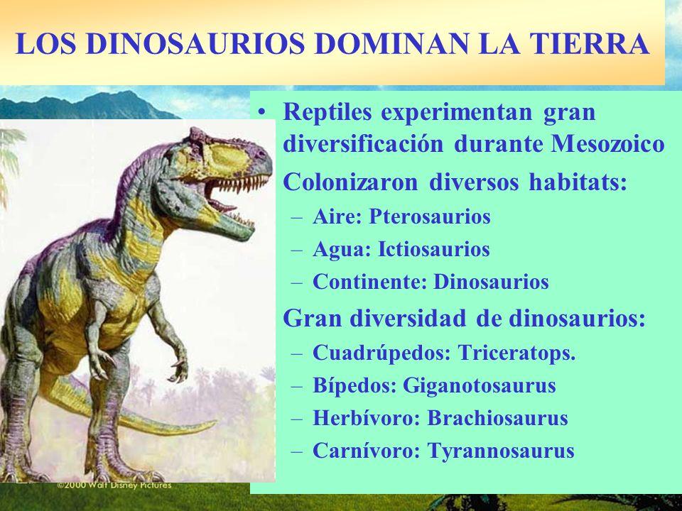 LOS DINOSAURIOS DOMINAN LA TIERRA Reptiles experimentan gran diversificación durante Mesozoico Colonizaron diversos habitats: –Aire: Pterosaurios –Agu