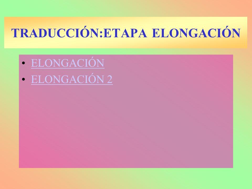 ELONGACIÓN ELONGACIÓN 2 TRADUCCIÓN:ETAPA ELONGACIÓN