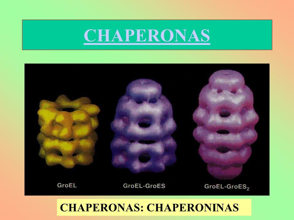 CHAPERONAS: CHAPERONINAS